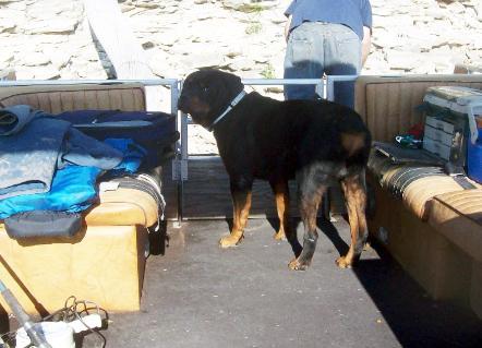 AKC German Rottweilers of Ken's Kennel, Breeding working, security